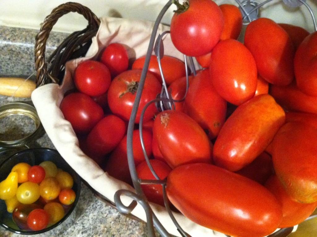 Tomato_Seeds.1
