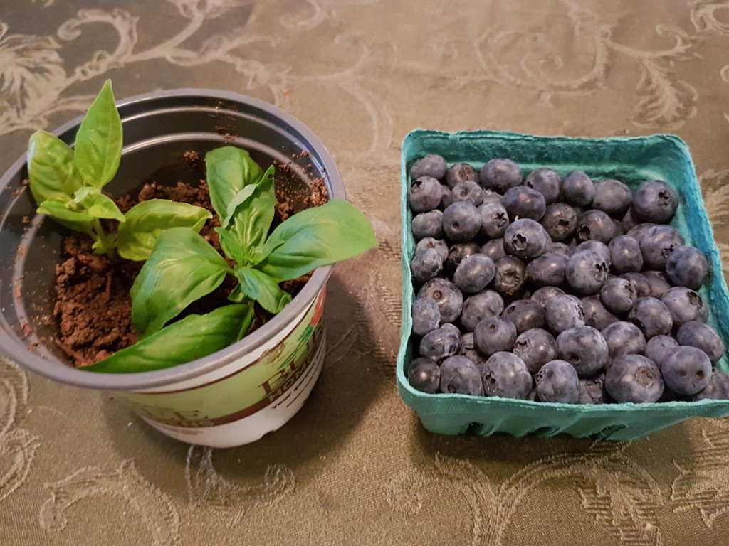 Basil and blueberries