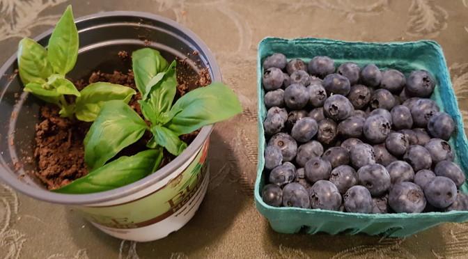 Blueberry basil iced tea