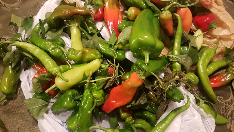 so many peppers