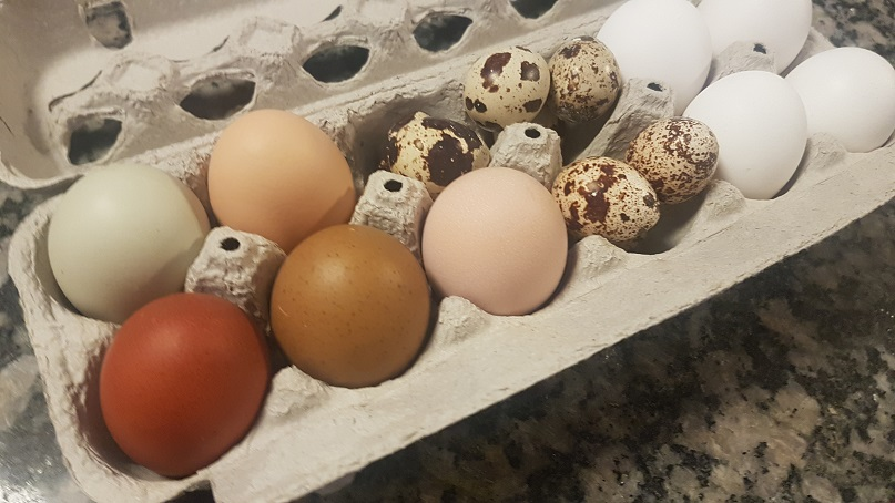 carton full of quail and chicken eggs